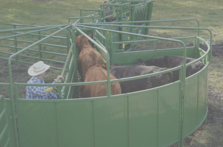 cows in tub and alley
