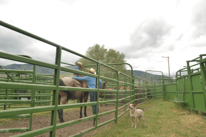classic panels and gates on ranch