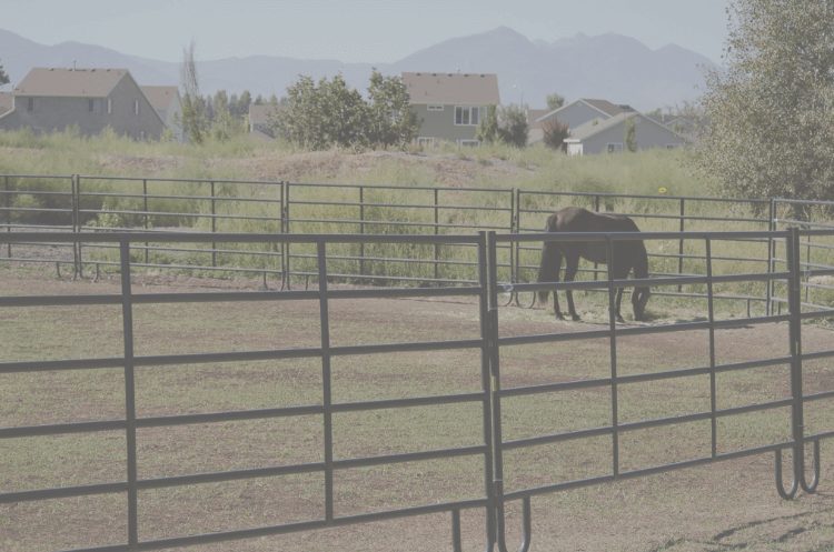 panels around a pasture with a horse in it